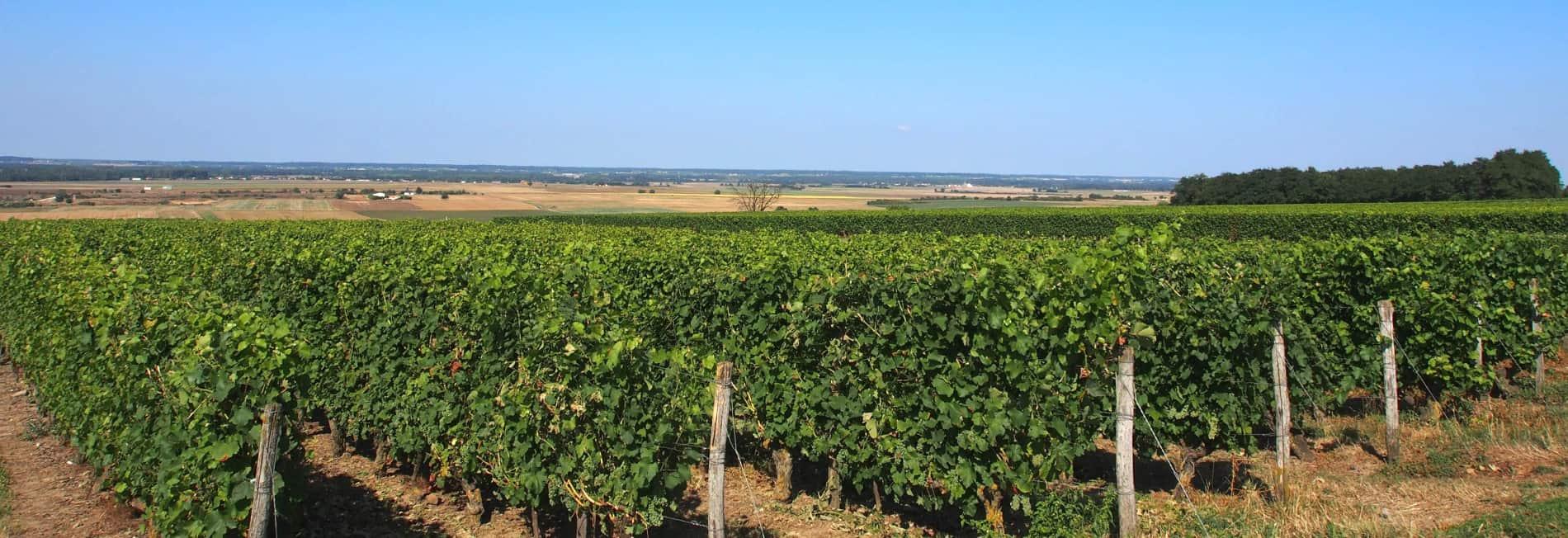 vignes sur Pouant Isabelle Suire